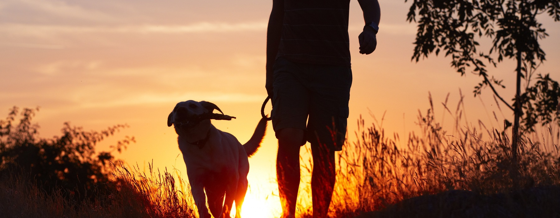 Sillouette of man and dog during sunset
